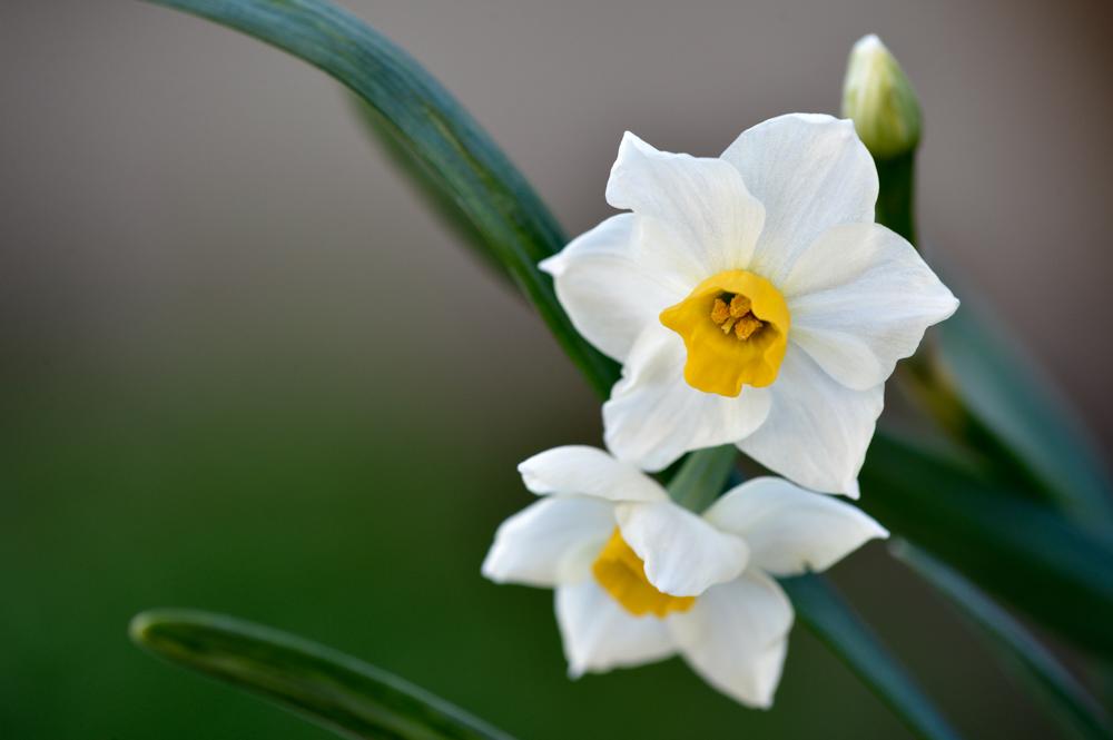 春の兆しをマイクロレンズで撮る