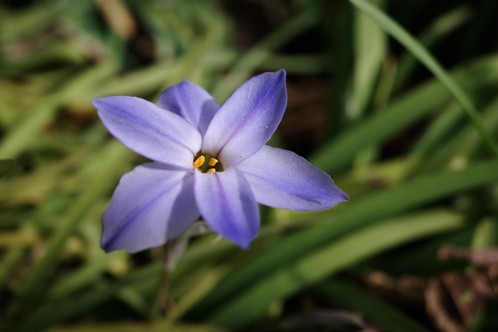 GRIII で春を撮る